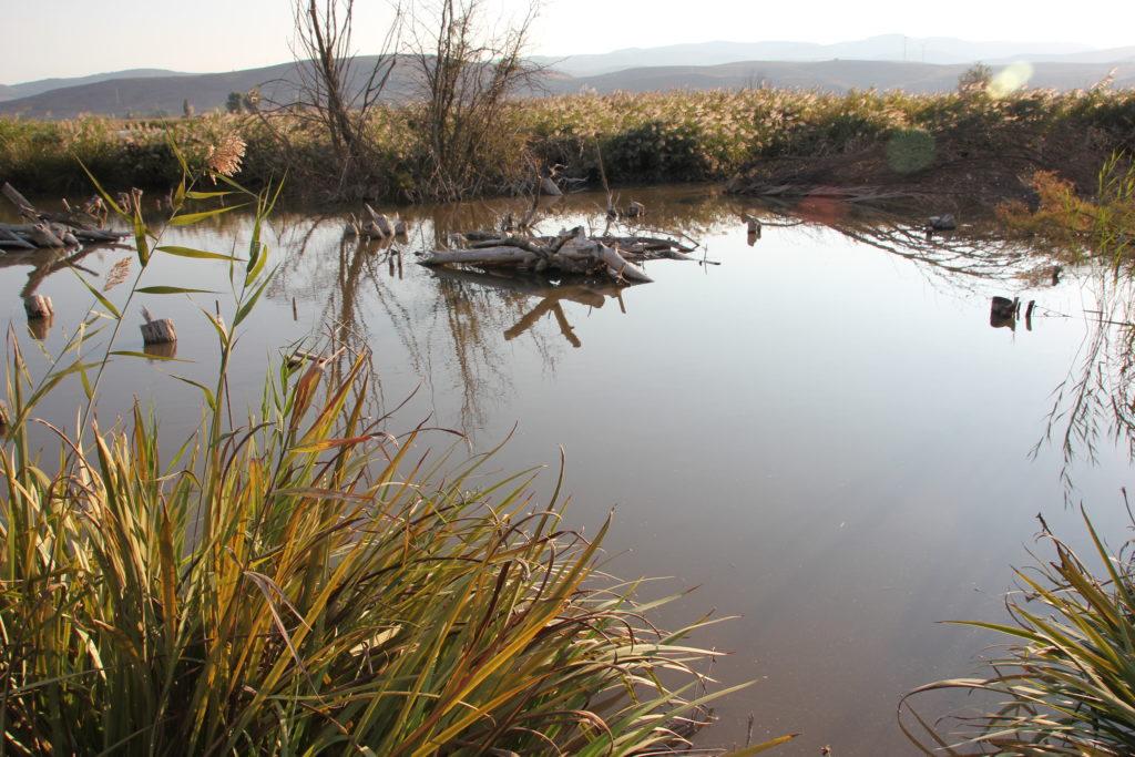 laguna del humedal de padul